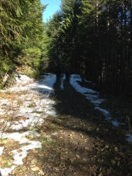 Beginning trail